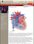 Captura de http://www.texasheartinstitute.org/HIC/anatomy_Esp/anato_sp.cfm